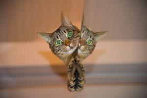 一人暮らし,猫,飼いやすい
