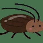 梅雨~夏の完璧・最強のゴキブリ対策!苦手な男性でも出来る退治方法や増える原因は?