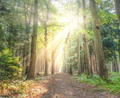 木の間から光