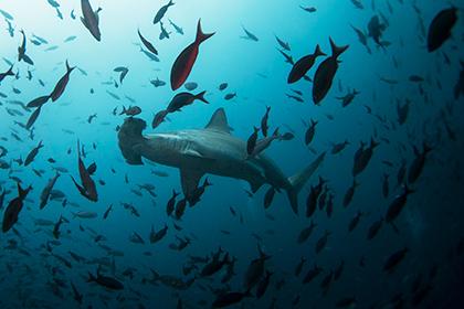 Уровень кислорода в Мировом океане стал катастрофически низким