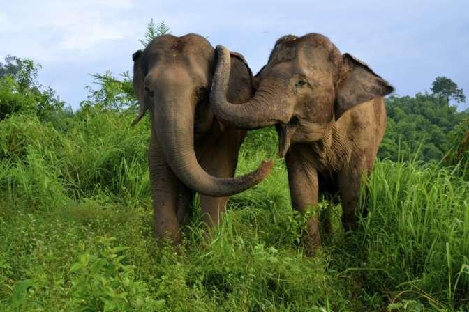 Слоны спят всего два часа всутки— Биологи