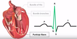 Video: Cardiac Conduction System and its Relationship with ECG‬
