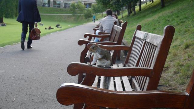 Ces fameux écureuils présents en masse dans tout le Royaume-Uni