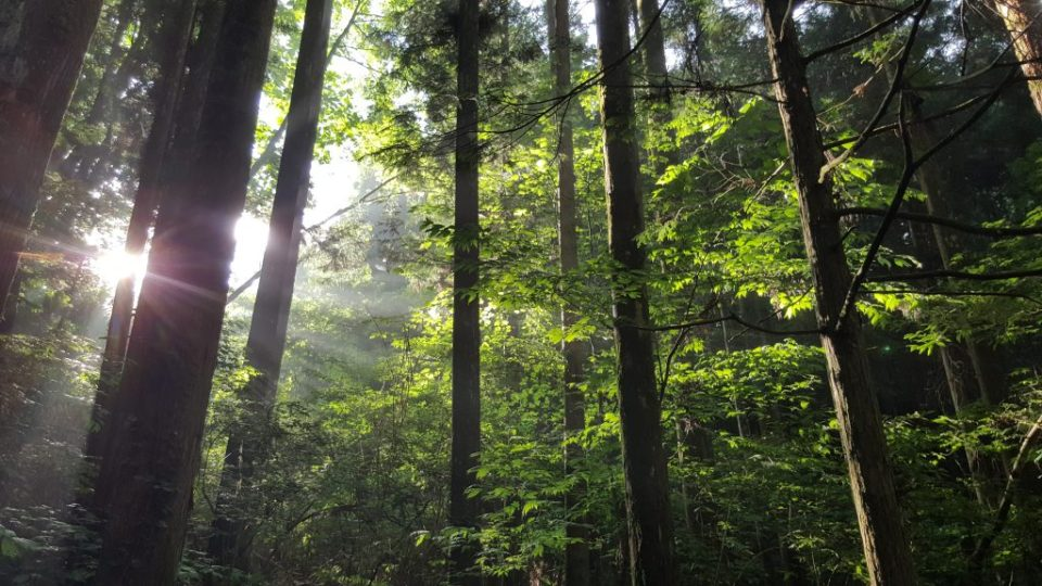 On peut presque ressentir l'esprit des arbres