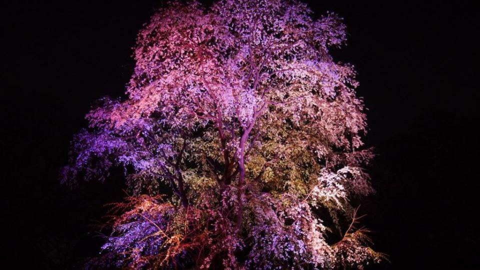 Illuminations nocturnes à Rikugien