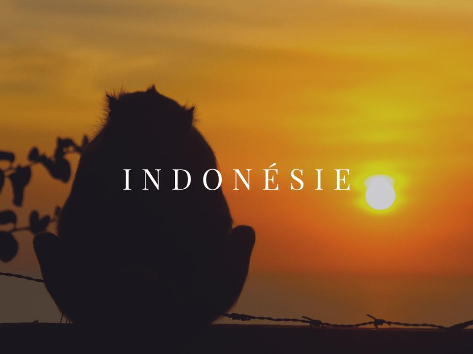 Indonésie AFQ