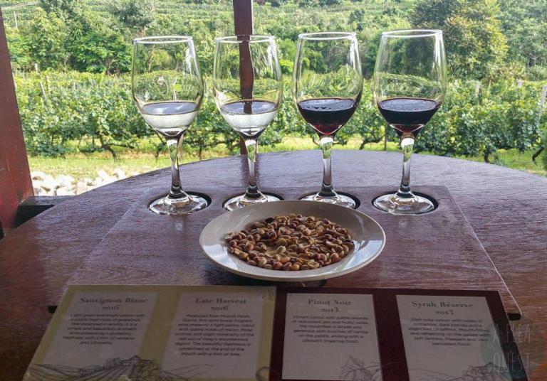 Notre sélection de vin avec ses petites cacahuètes avec vue sur le domaine viticole