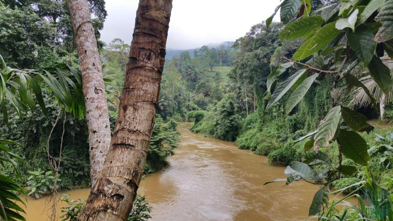 Rivière à Sinharaja