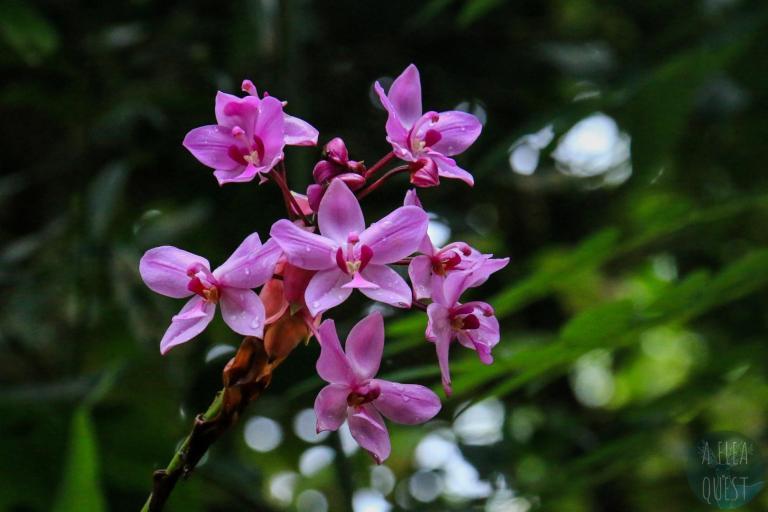 Orchidées, les fleurs favorites de Dante