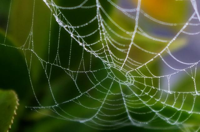 蜘蛛 の 巣 対策