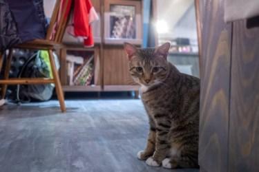 マンションやアパートがペット禁止!猫を飼いたい場合は?