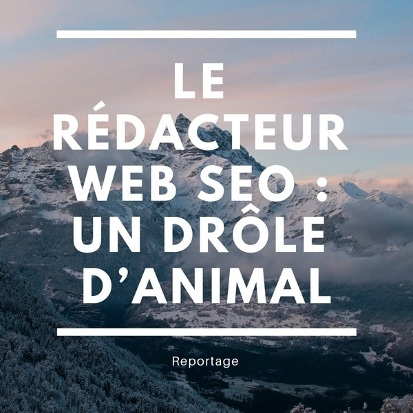 rédacteur-web-seo-animal