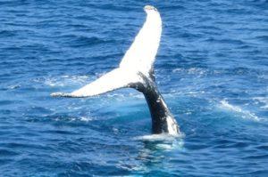 baleine faire de la voile animaux mythiques magie