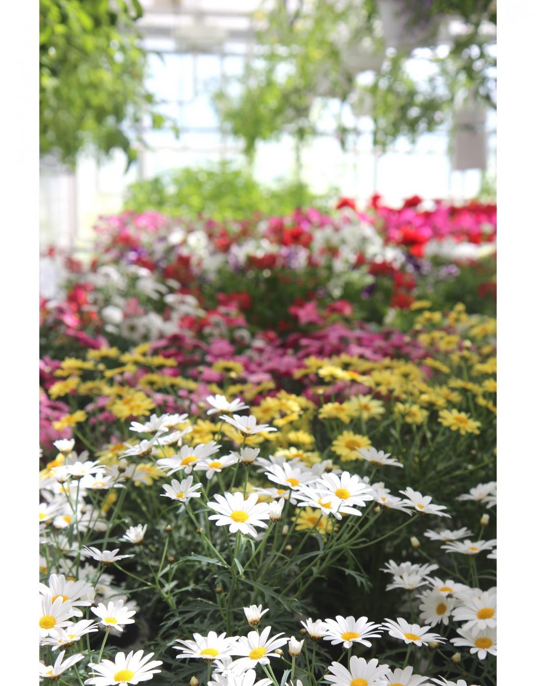 Kesäloma, piha ja puutarha