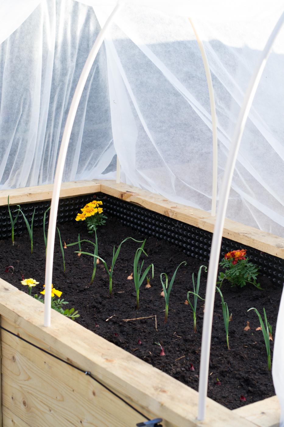 Puutarhassa: Lavatarhan perustaminen osa3
