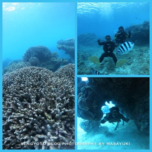 沖縄北部ダイビング|サンゴMORIMORI画像