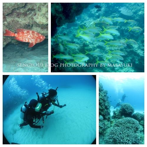 沖縄ダイビングライセンス取得 PADI・OWD 海洋実習トレーニング2