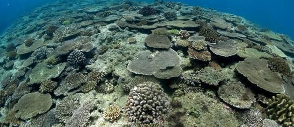 ミニドリームホール|サンゴ