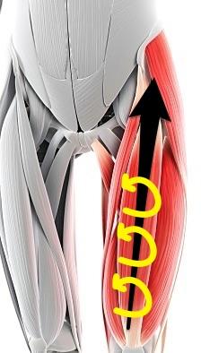 大腿四頭筋マッサージ