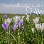 Wandern am Hündle – Zur Krokusblüte ein wahrer Augenschmaus!