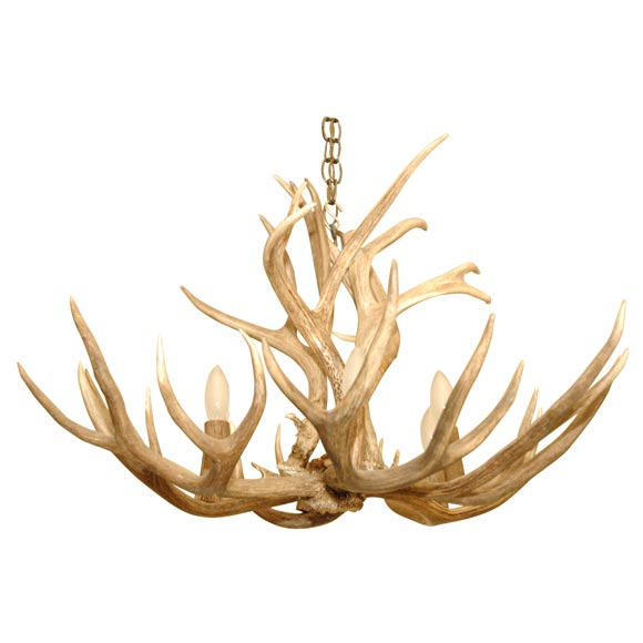 5 Point Stag Horn Chandelier 1