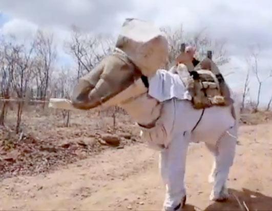 Beekeeping Donkey