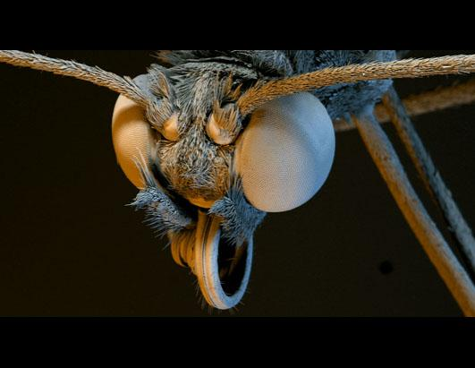 Bugged out - Microscopic Photography