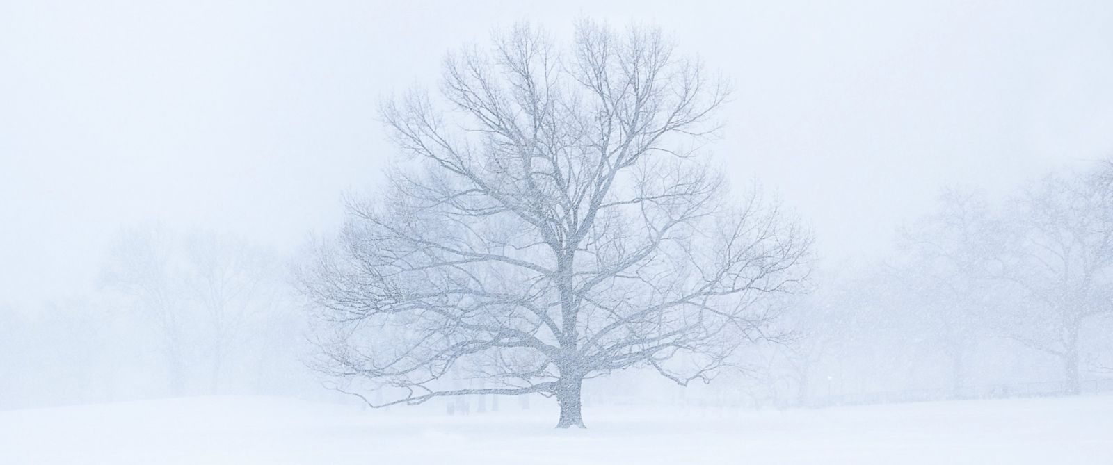 Image result for blizzard