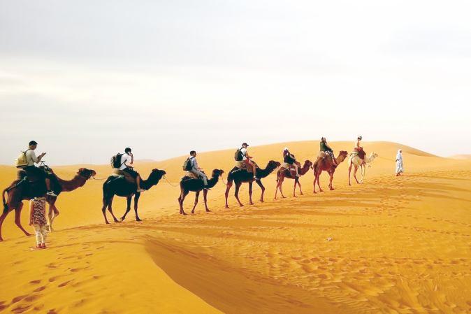 Camel ridesi tour activity in Qatar