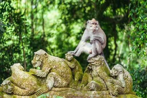 Ubud Monkey Forest in Bali - Sanctuary of Grey Macaques in Ubud - Go Guides