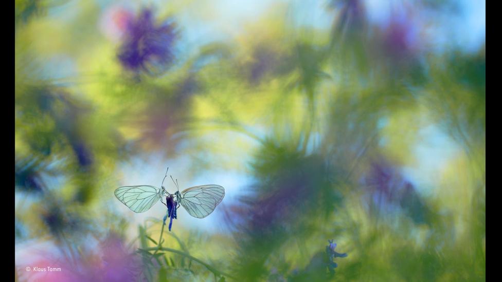 Mariposas (Foto: Klaus Tamm)