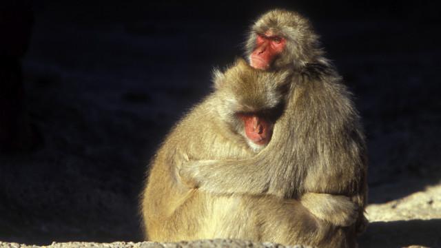 Dos monos abrazándose