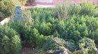 Brutal marihuana jungle found in Spain.