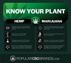 Key differences between Hemp and Marijuana