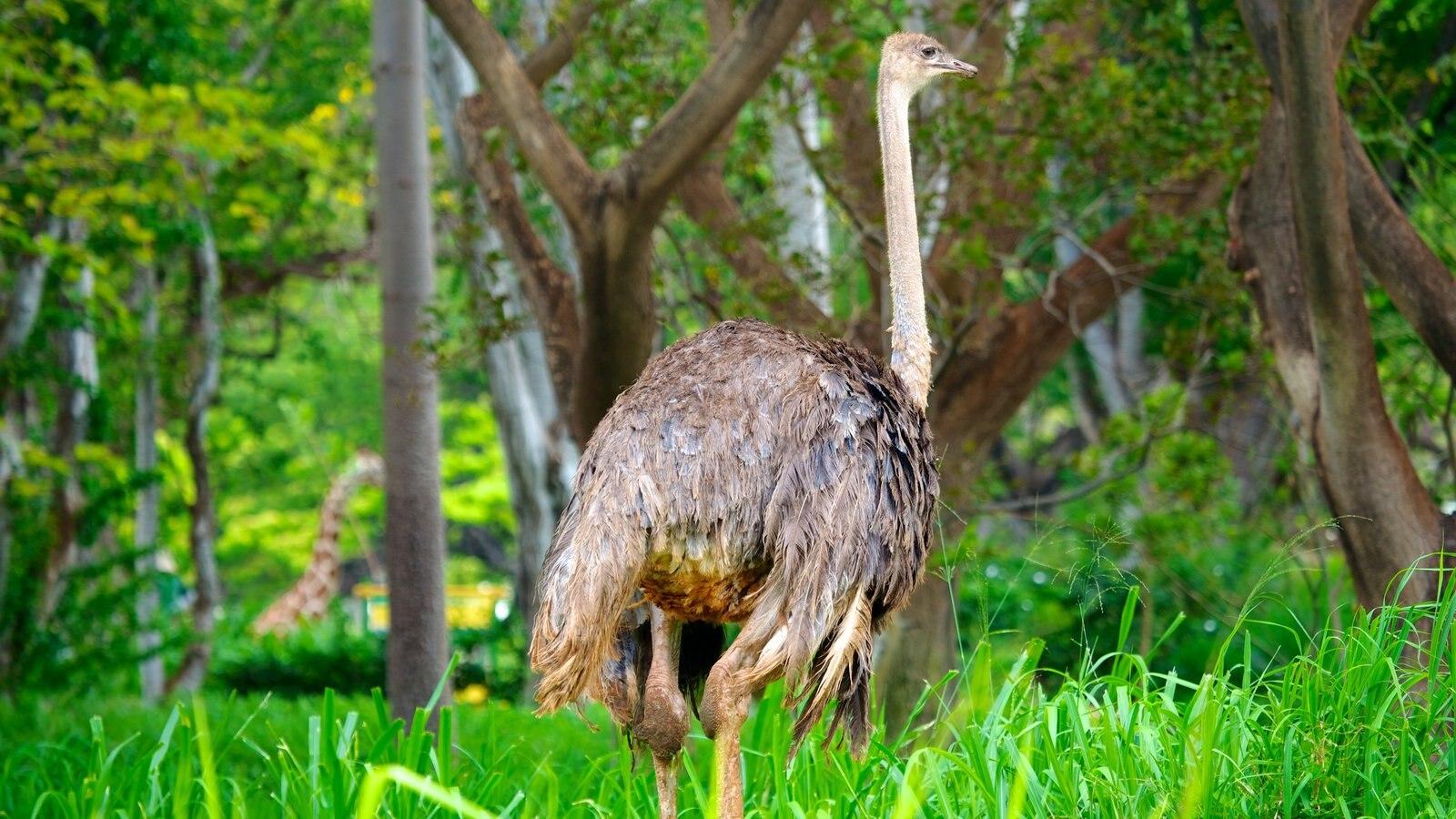 Animals Native Hawaii Waikiki