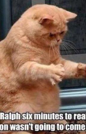 Sad Cat Fades Away Disintegration Effect I Don T Feel So Good Know Your Meme