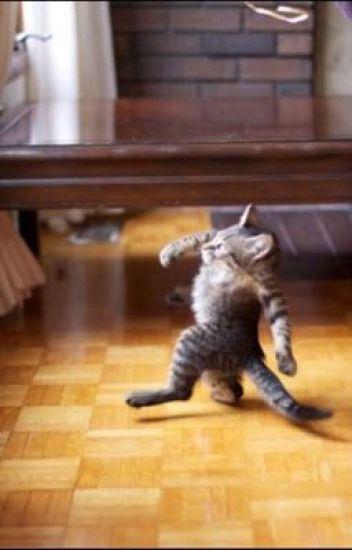 Black Cat Jokes Dark Kitty Riddles Funny Cat Memes Feline