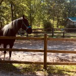 Cozy 1bdr 1 Bath Cottage On 8 Acre Horse Farm Cottages For Rent In Carthage North Carolina United States