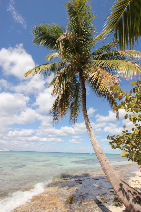 Isla Saona - Palm Tree at the Beach Art Print / SMALL 13