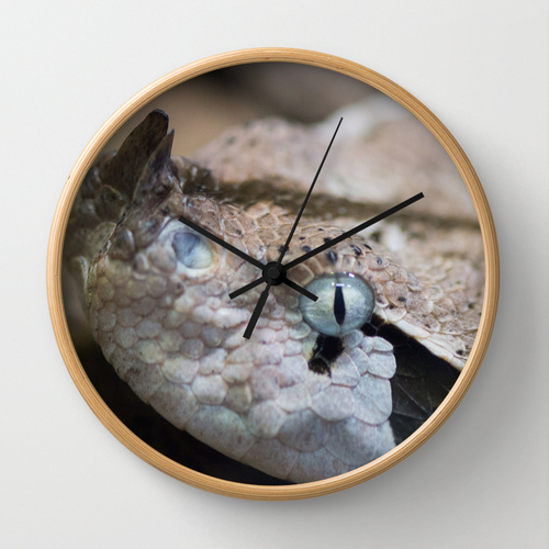 snake horned horn photograph photo reptile art wall clock gift guide Society6 Jessica Pei