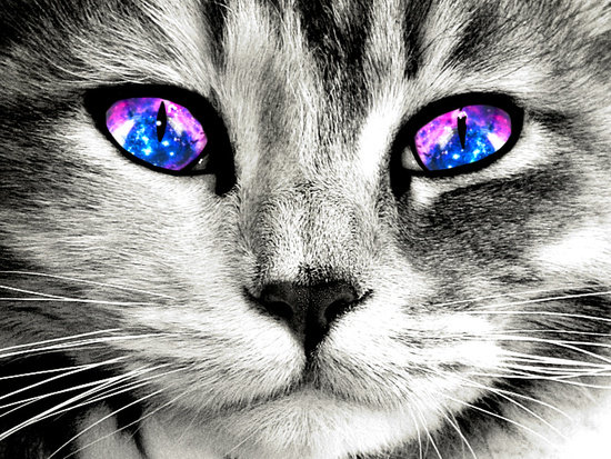 cat galaxy eyes