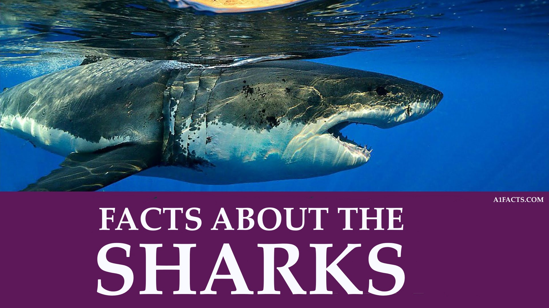 10 Crazy Random Facts About Sharks