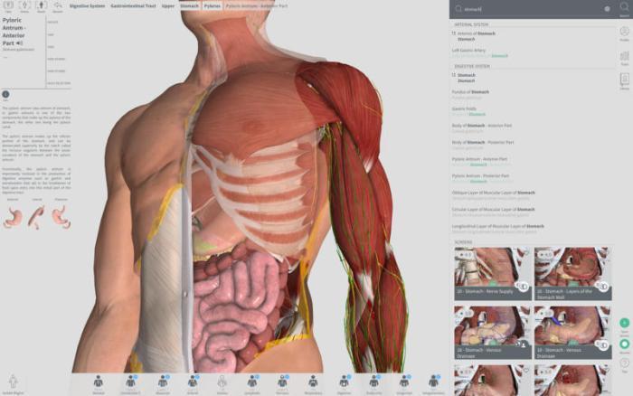 Complete Anatomy 2018 3 0 download free | Mac Torrent Download