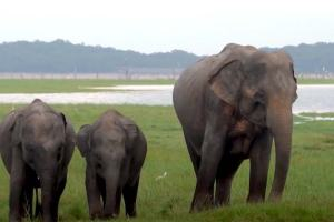 The pride of nature – Elephants in Sri Lanka