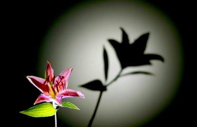 lily photo gallery by bill warren