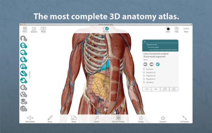 1_Human_Anatomy_Atlas_–_3D_Anatomical_Model_of_the_Human_Body.jpg