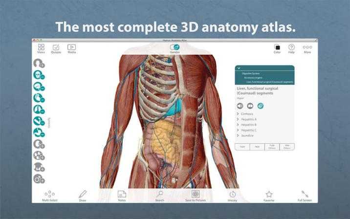 1_Human_Anatomy_Atlas_–_3D_Anatomical_Model_of_the_Human_Body.jpg
