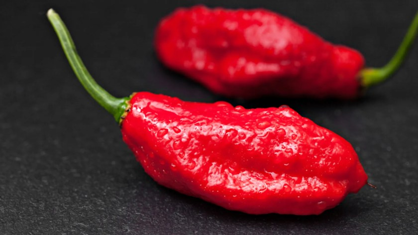 Hasil gambar untuk ghost pepper