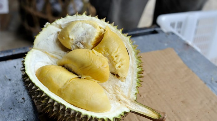 A broadcast Durian, sometimes called