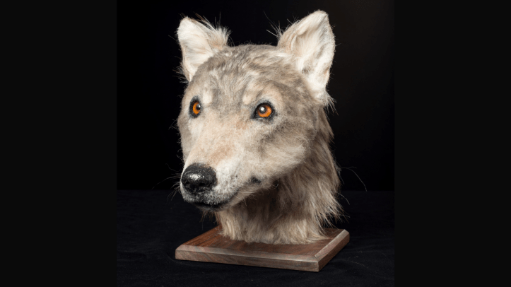 This Neolithic dog was undoubtedly a very good boy.